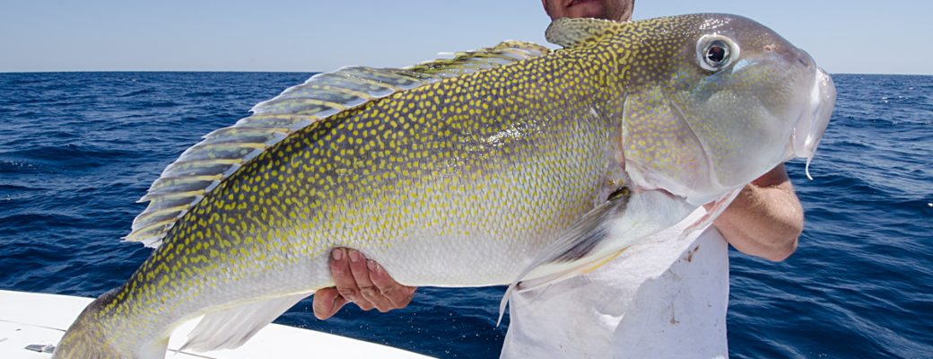 Dining On Tilefish