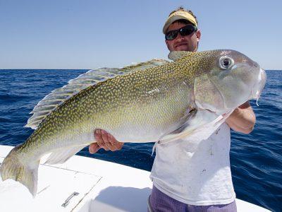 Gulf Of Mexico Charter Tilefish